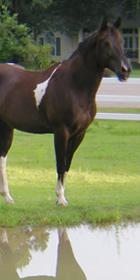 horse2-280